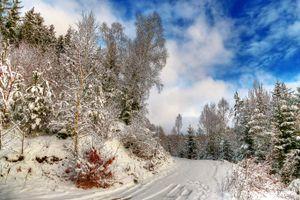 Фото бесплатно зима, деревья, дорога