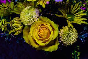 Заставки цветы, букет, роза