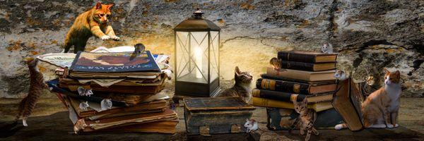 Фото бесплатно кошки, мышки, панорама