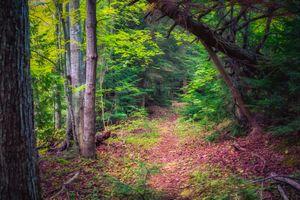 Заставки природа, тропинка, деревья