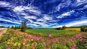 Фото бесплатно поле, небо, облака