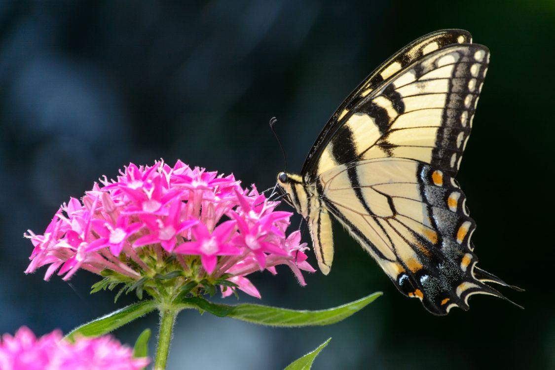 Обои с бабочками · бесплатное фото