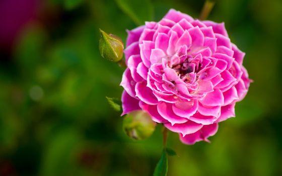 Фото бесплатно цветок, сад, природа