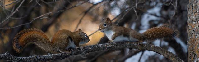 Фото бесплатно белки, грызун, дерево