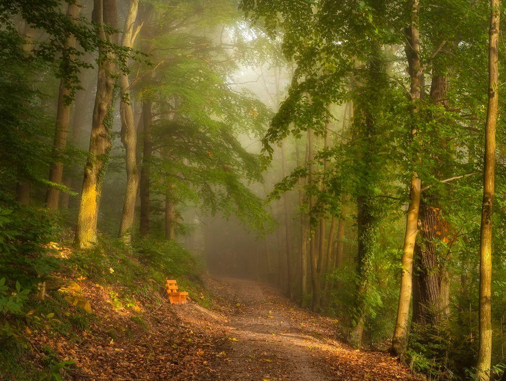 Туман в лесу · бесплатная заставка