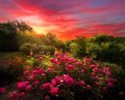 Фото бесплатно цветы, деревья, розы