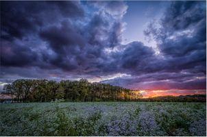 Бесплатные фото закат,поле,цветы,деревья,небо,облака,природа