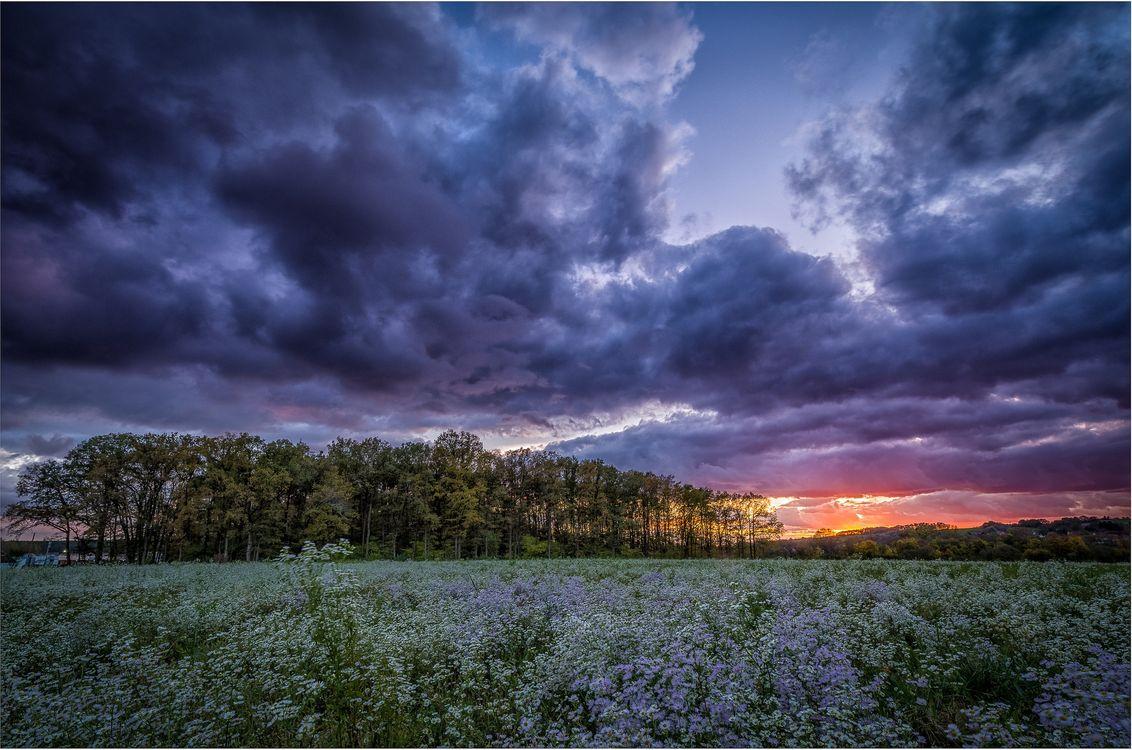 Фото бесплатно облака, деревья, природа - на рабочий стол