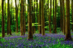 Фото бесплатно деревья, цветы, природа
