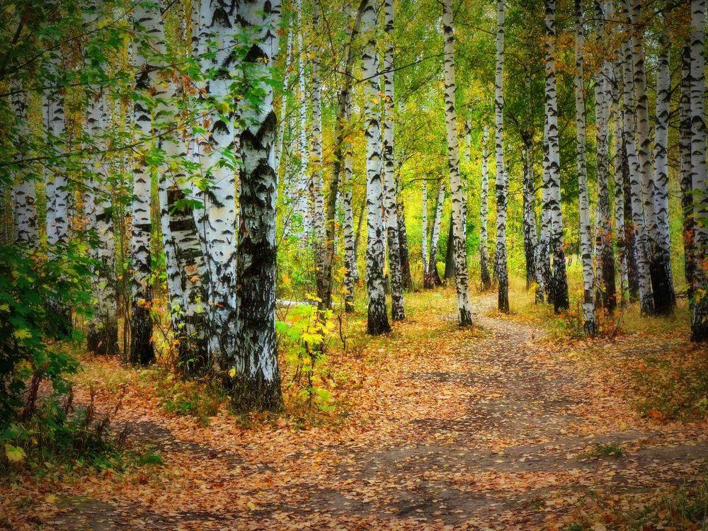 Обои осень, иду лесной дорогой, лес картинки на телефон