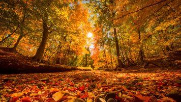 Фото бесплатно осень, солнечные лучи, деревья