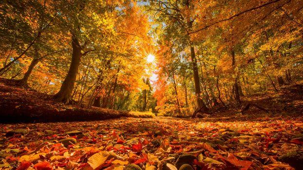 Photo free autumn, suns rays, trees