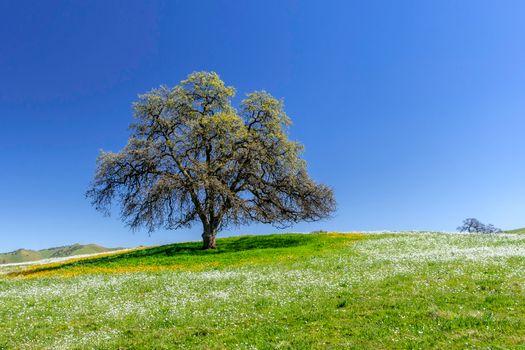 Фото бесплатно природа, холм, одинокое дерево