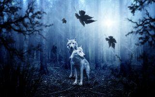 Фото бесплатно лес деревья, хищники, волки