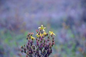Бесплатные фото растение,осень,пейзаж,поле,рыжих,лепестки,лиловый фон