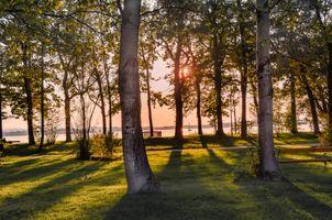 Заставки закат, природа, дерево