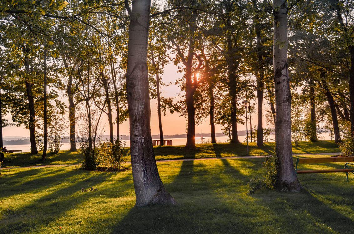 Фото бесплатно закат, природа, дерево, древесное растение, лист, роща, трава, солнечный лучик, утро, легкий, растение, осень, весна, дорожка, парк, вечер, небо, пейзаж, лесистая местность, лужайка, филиал, тень, отдых, лес, природа - скачать на рабочий стол