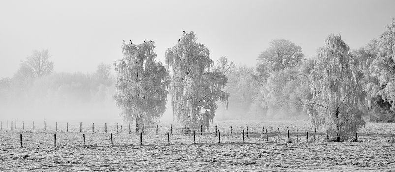 Бесплатные фото зима,деревья,иней,туман,панорама