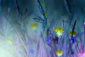 Фото бесплатно подсветка, растения, макро