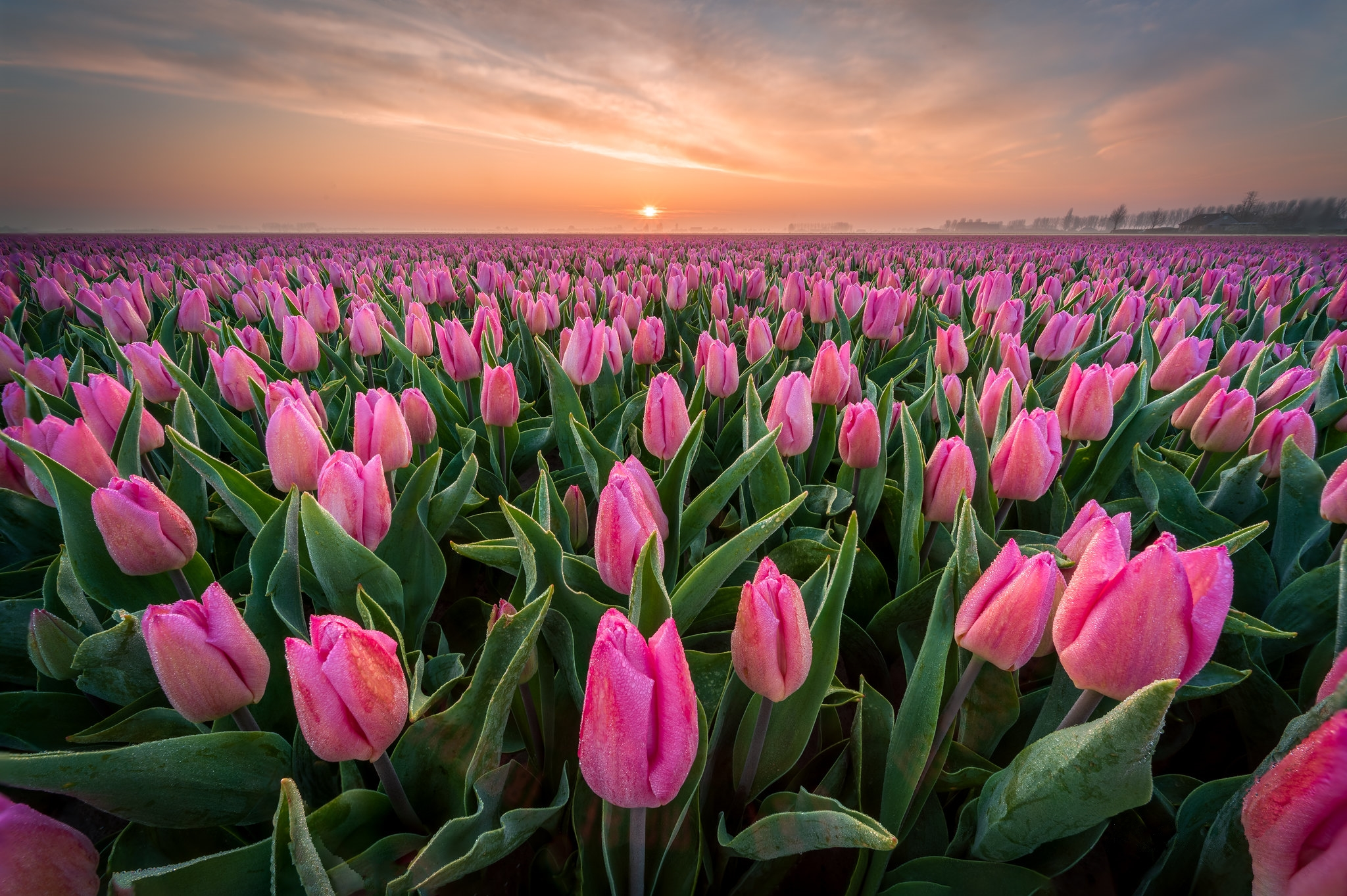 нас красивые фото тюльпанов большие месяцы жизни вставал
