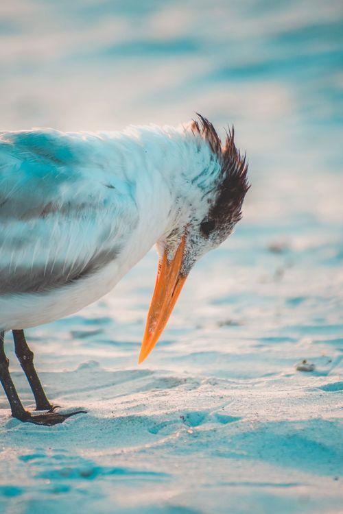 Фото птица глаз перо - бесплатные картинки на Fonwall