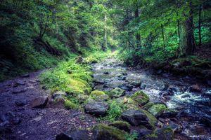 Бесплатные фото лес,деревья,река,камни,тропинка,природа,пейзаж