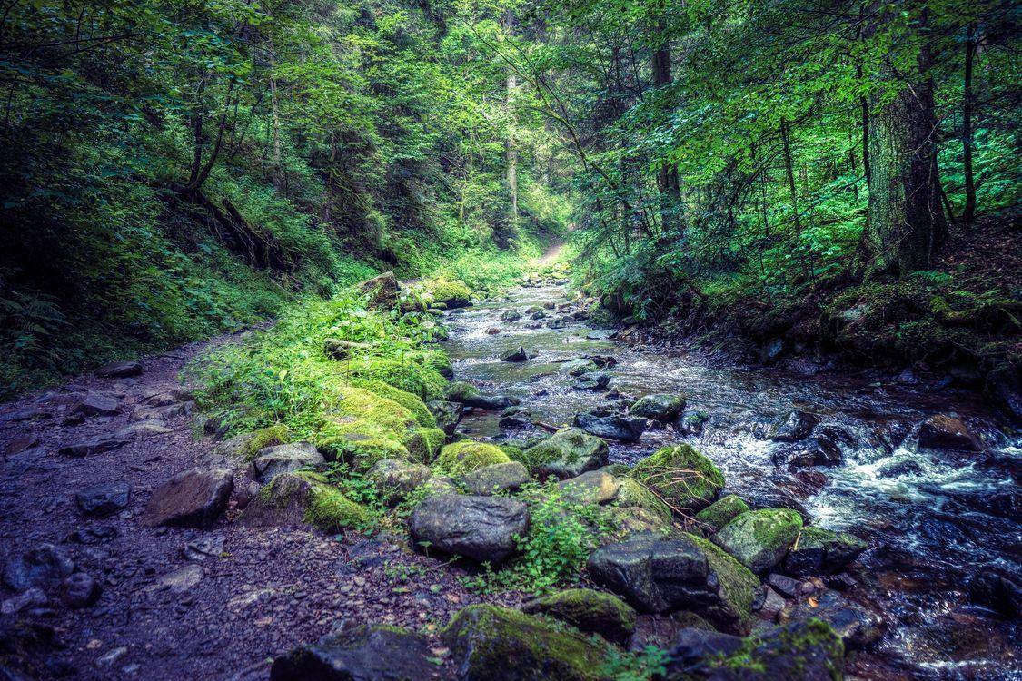 Фото бесплатно лес, деревья, река, камни, тропинка, природа, пейзаж, пейзажи