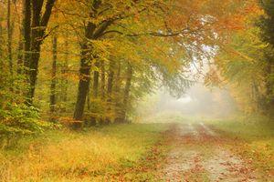 Бесплатные фото осень,деревья,парк,лес,туман,дорога,пейзаж
