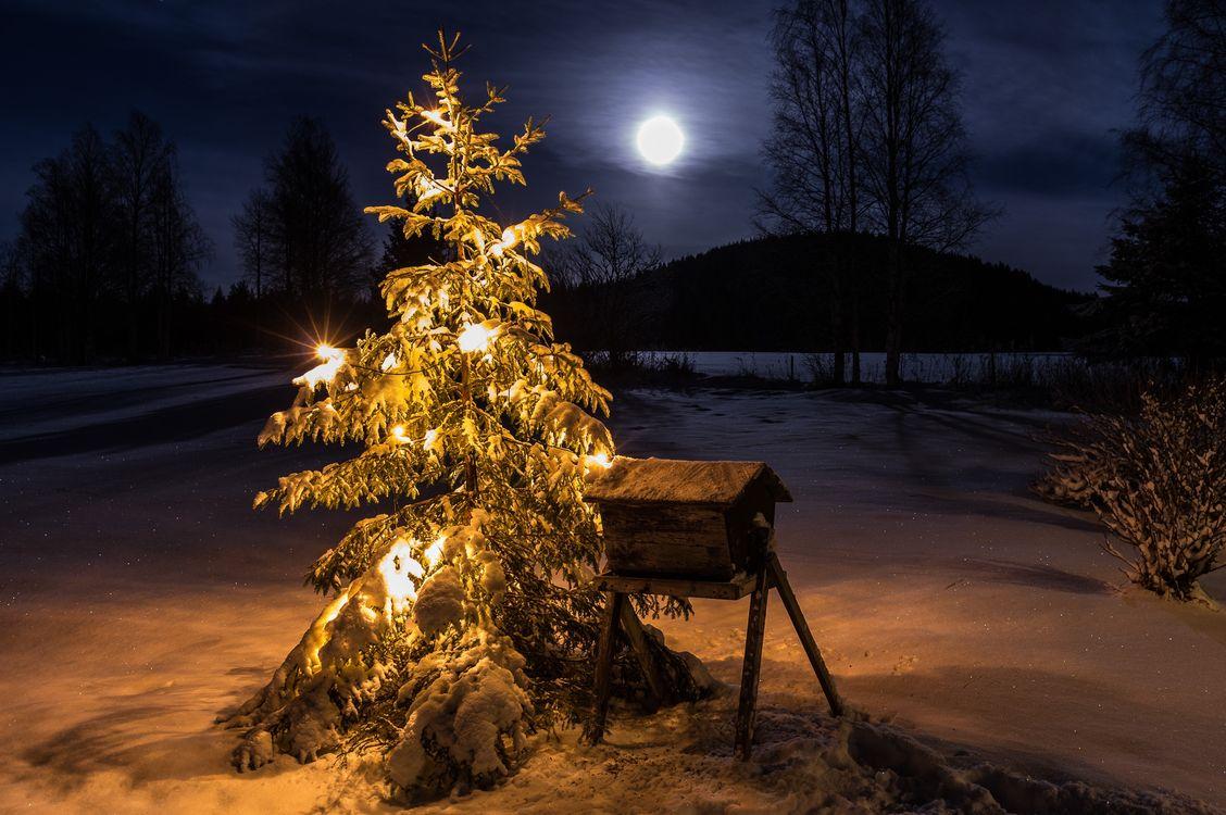 она картинки ночь лес новый год время живописец
