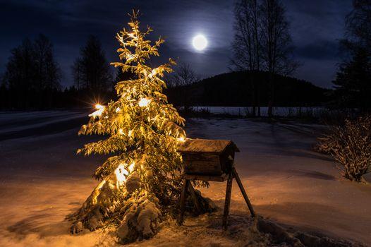 Бесплатные фото зима,новый год,рождество,новогодняя ёлка,снег,ночь,лунный свет,луна,новогодние обои,иллюминация,огни,природа