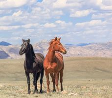Бесплатные фото дикие,лошади,wild horses,Wyoming,USA