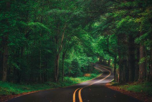 Извилистая лесная дорога · бесплатное фото