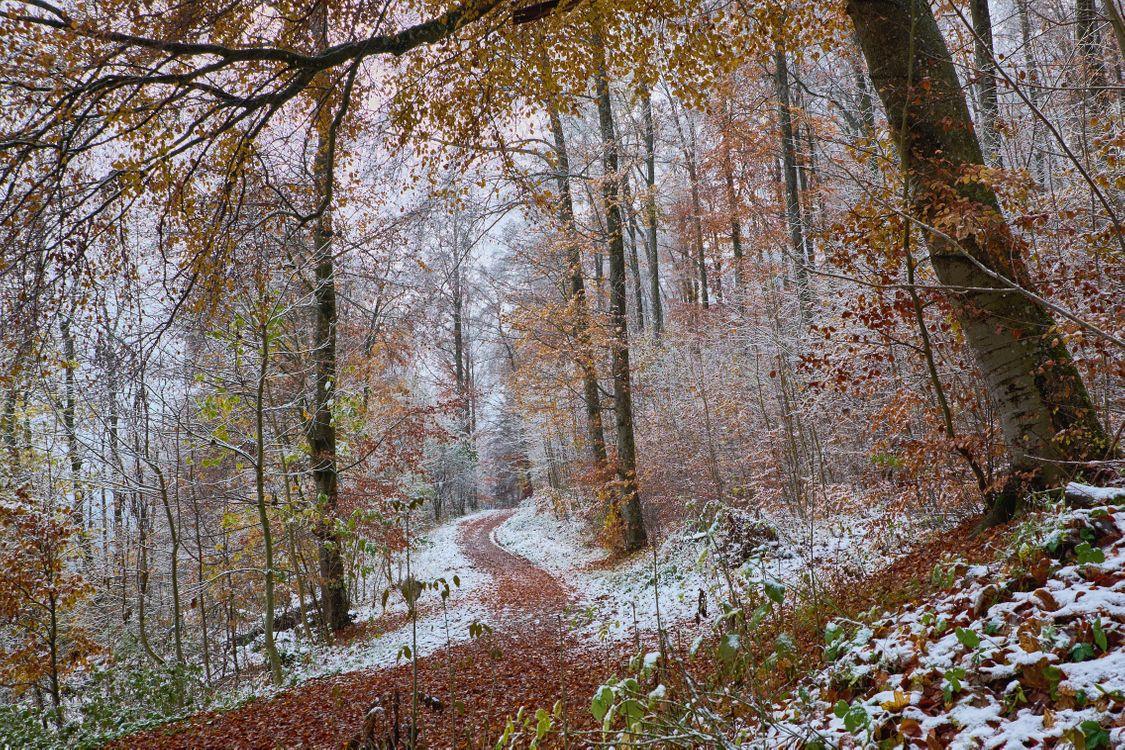 Фото бесплатно осень, осенний лес, снег, деревья, природа, тропинка, осенние листья, пейзаж, осенние краски, пейзажи