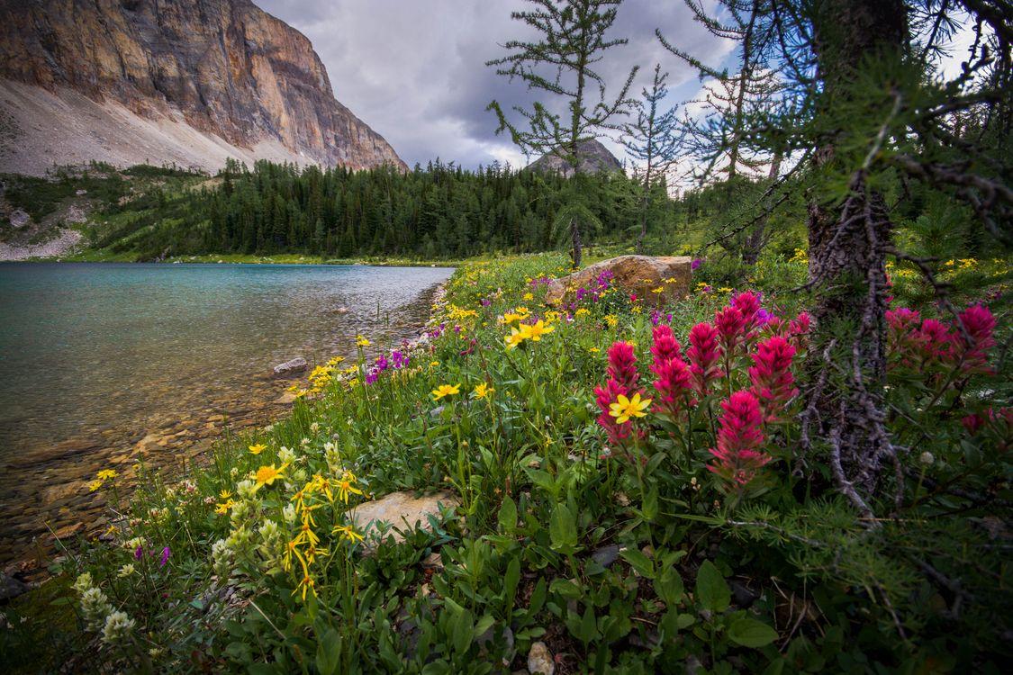Фото бесплатно Talc Lake, Национальный парк Банф, Канада, пейзажи