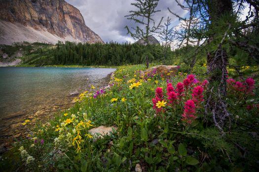 Фото бесплатно Talc Lake, Национальный парк Банф, Канада