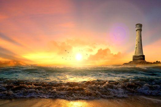 Photo free sunset, bird, landscape