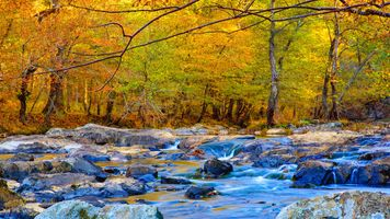 Бесплатные фото Eno River State Park in Durham,NC,осень,река,камни,лес,деревья