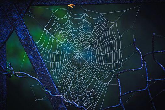 Фото бесплатно паутина, капли, рабица