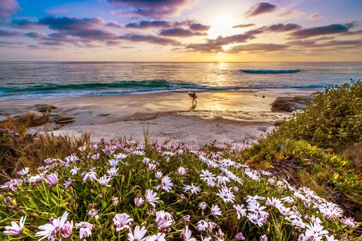 Beach Life in Southern California · free photo
