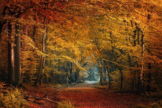 Фото бесплатно природа, дорога, парк