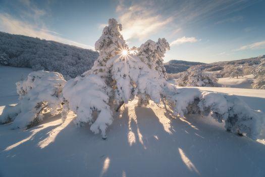 Wonder Forest · free photo