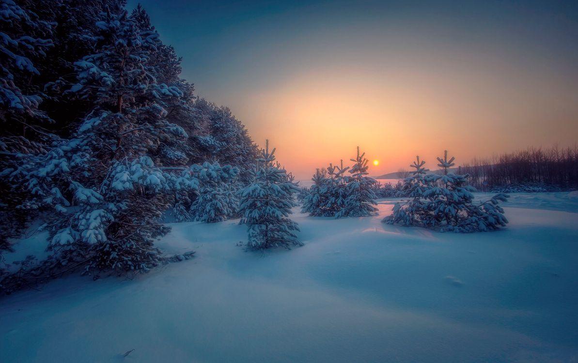 Фото бесплатно зима, закат, снег, сугробы, лес, деревья, природа, пейзаж, пейзажи