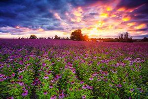 Фото бесплатно красивый закат, поле, цветы