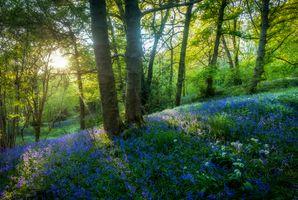 Фото бесплатно ВС лучи, пейзаж, цветы