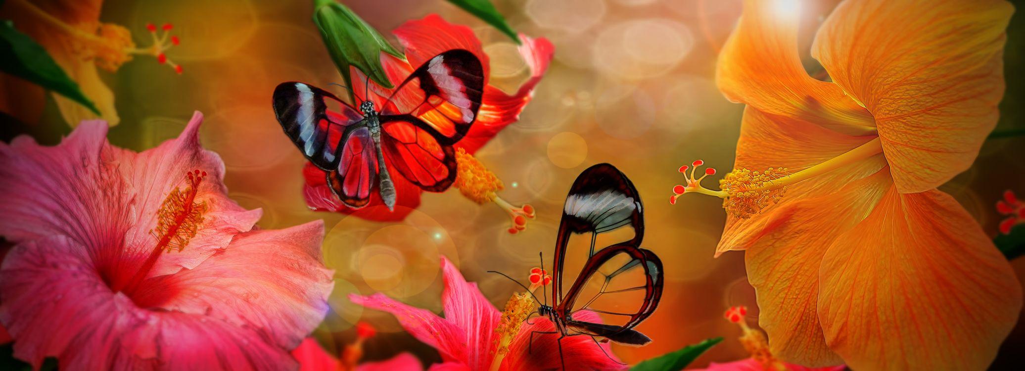 Открытка бабочка на розе, музыкальная поздравления