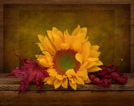 Фото бесплатно подсолнух, листья, цветок, деревянный фон, флора