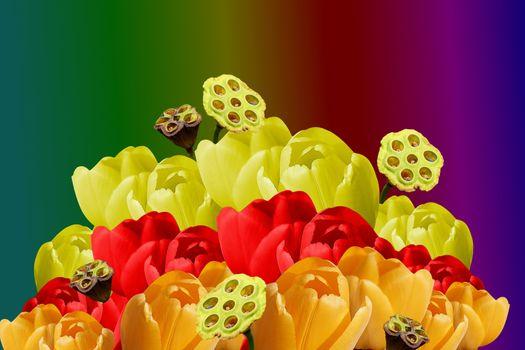 Бесплатные фото тюльпаны,цветочная композиция,букет,флора