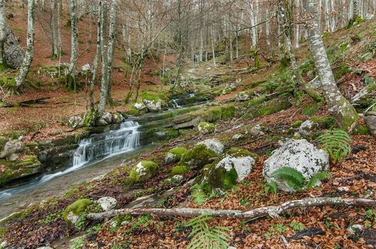 Photo free nature, flowing, landscape