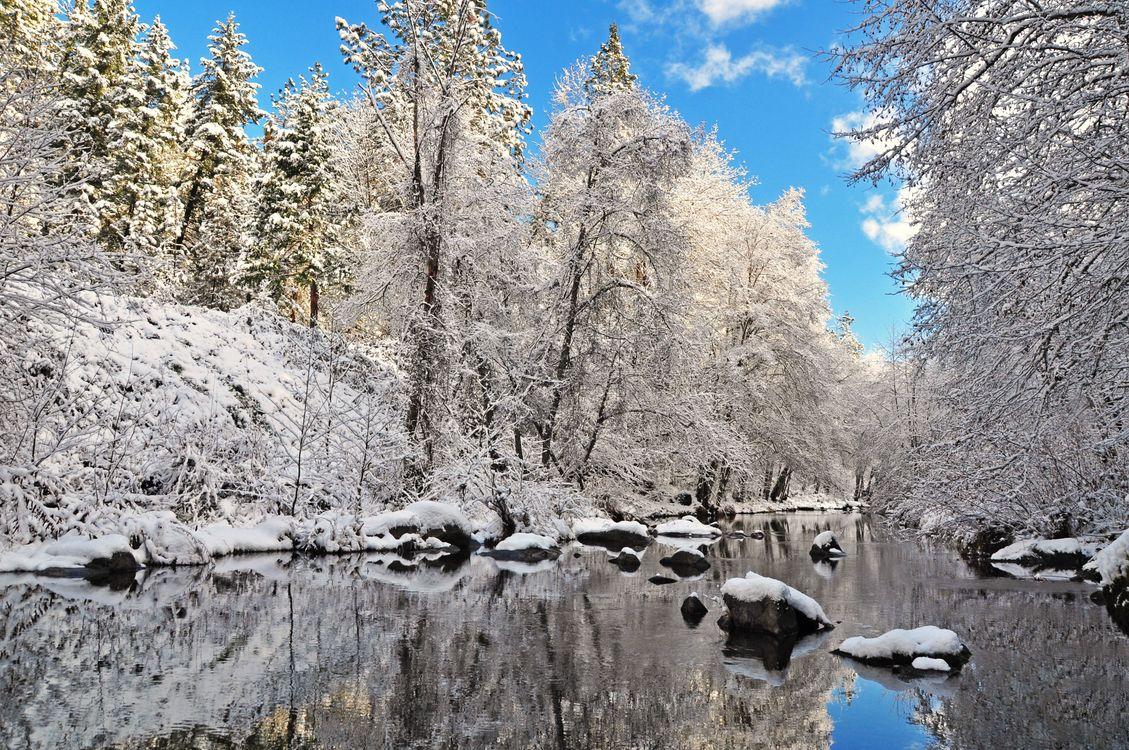 Зимняя река вдоль леса · бесплатное фото