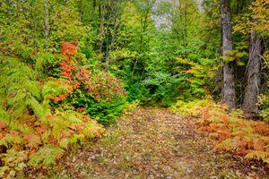 Бесплатные фото лес,деревья,осень,природа